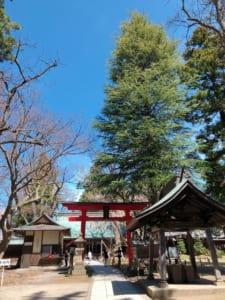 蚕養国神社、参道から鳥居方向