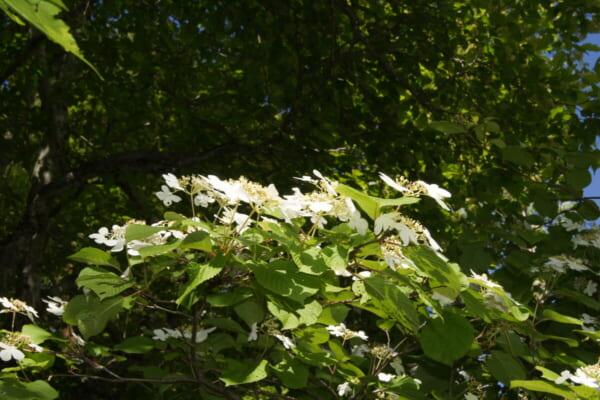 中瀬沼探勝路、花も咲いてました