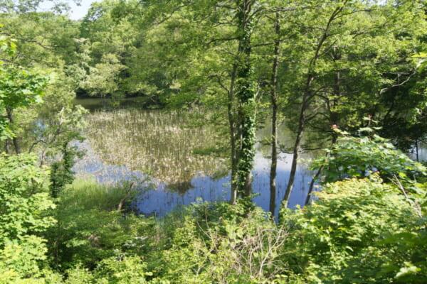 中瀬沼探勝路、中瀬沼の一部