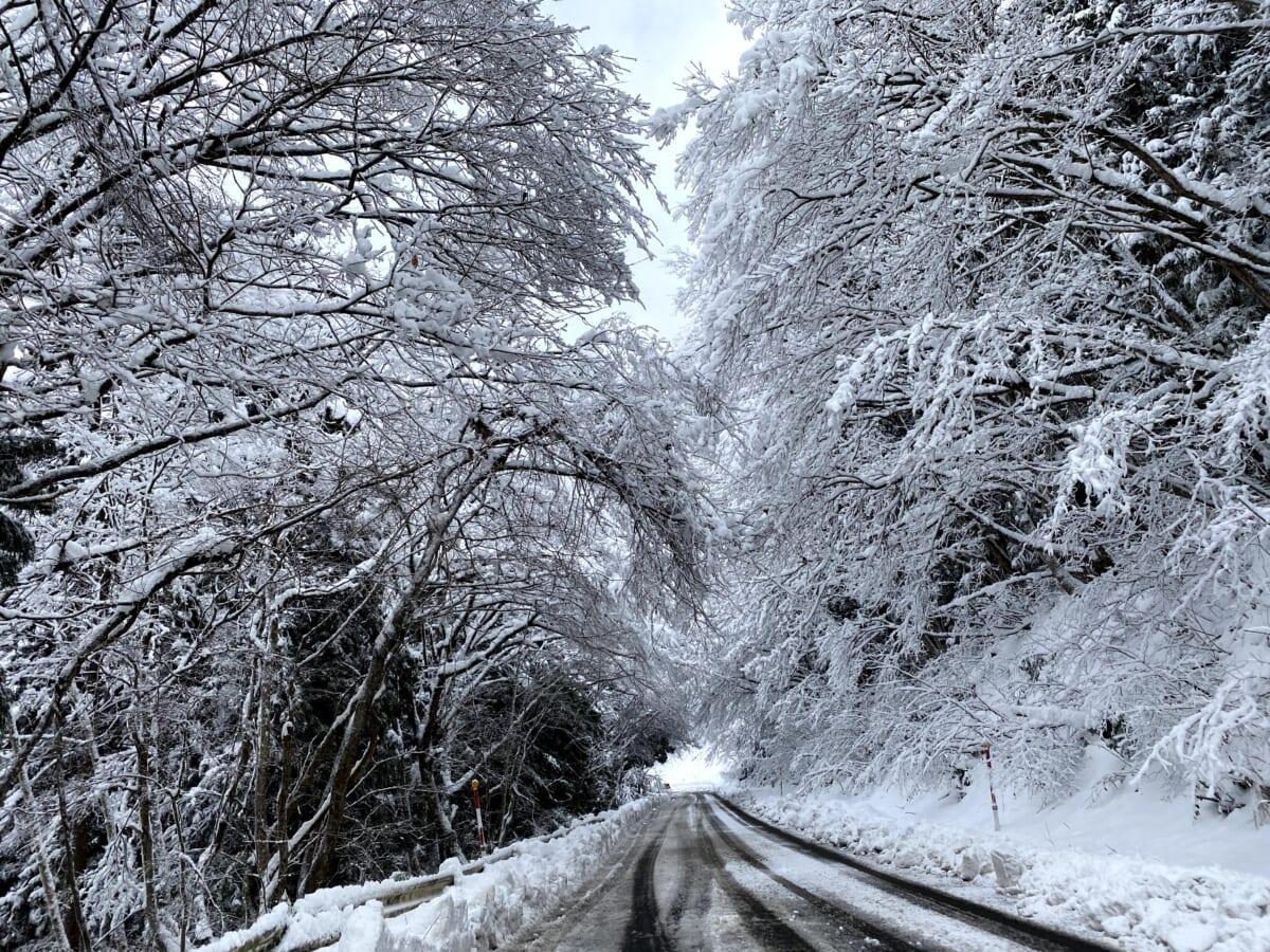 パールライン 雪景色